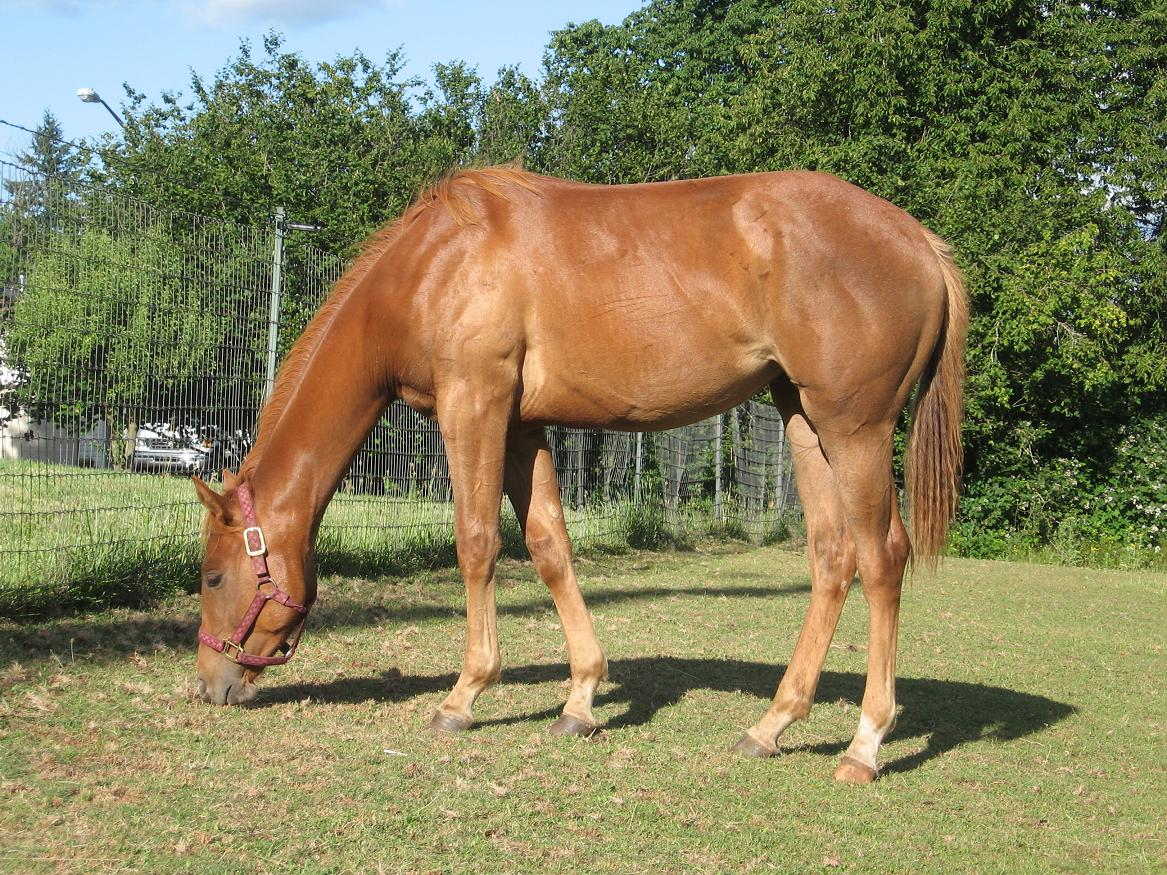 photo of 2009 filly